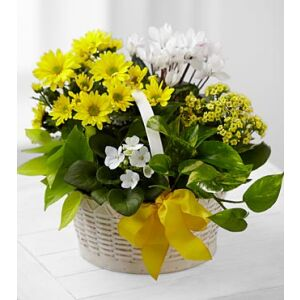 C22-4888 A Bit of Sunshine Basket by FTD